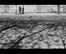 Tree Shadows and Pedestrians